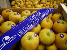 pommes cathares
